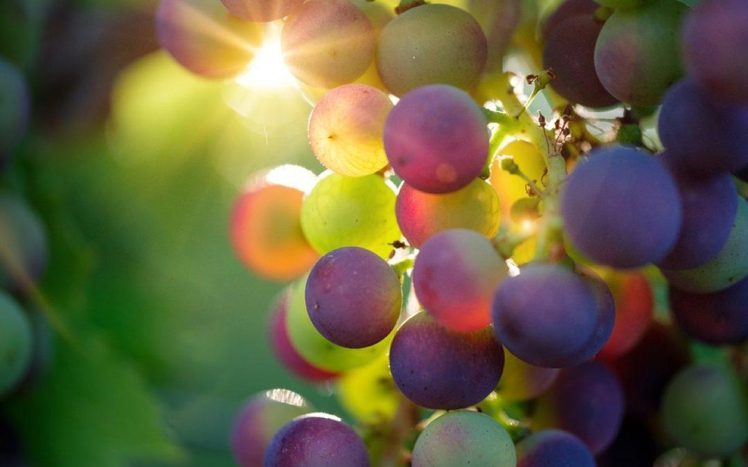 A água transformada em vinho