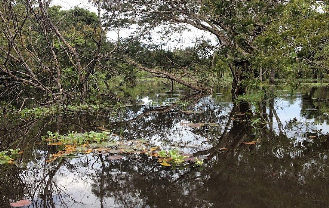 Ecologia integral, Pan-Amazónia, Casa Comum