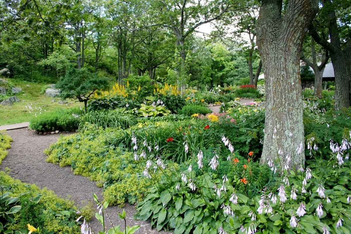 caminho do jardim com flores