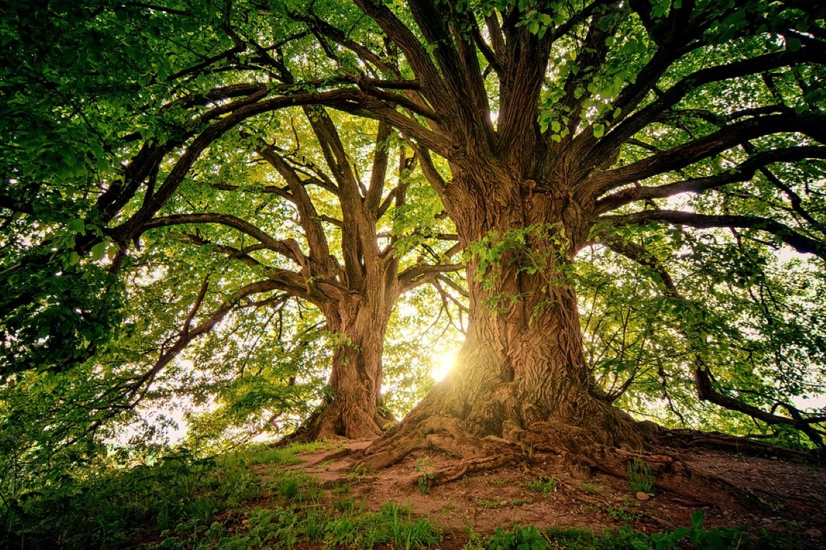 floresta, protecção