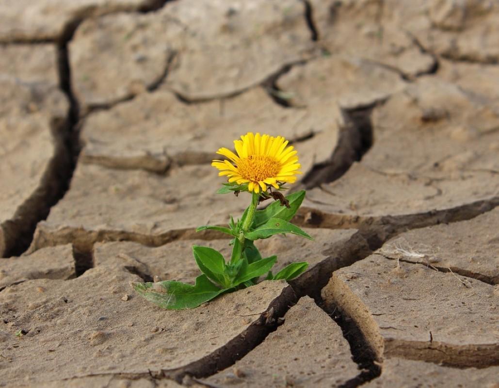 seca e flor