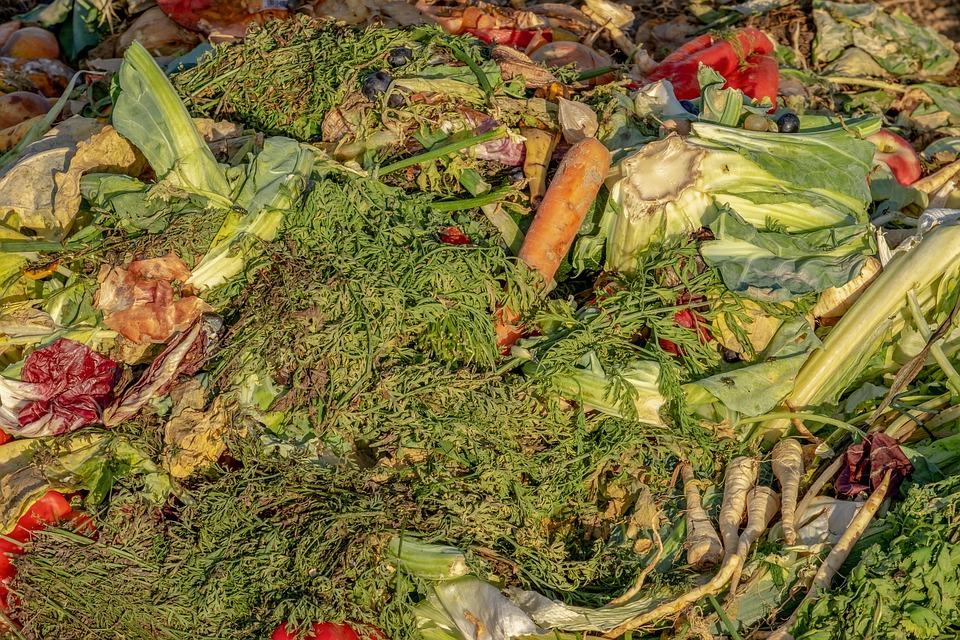 Fruta Feia combate o desperdício