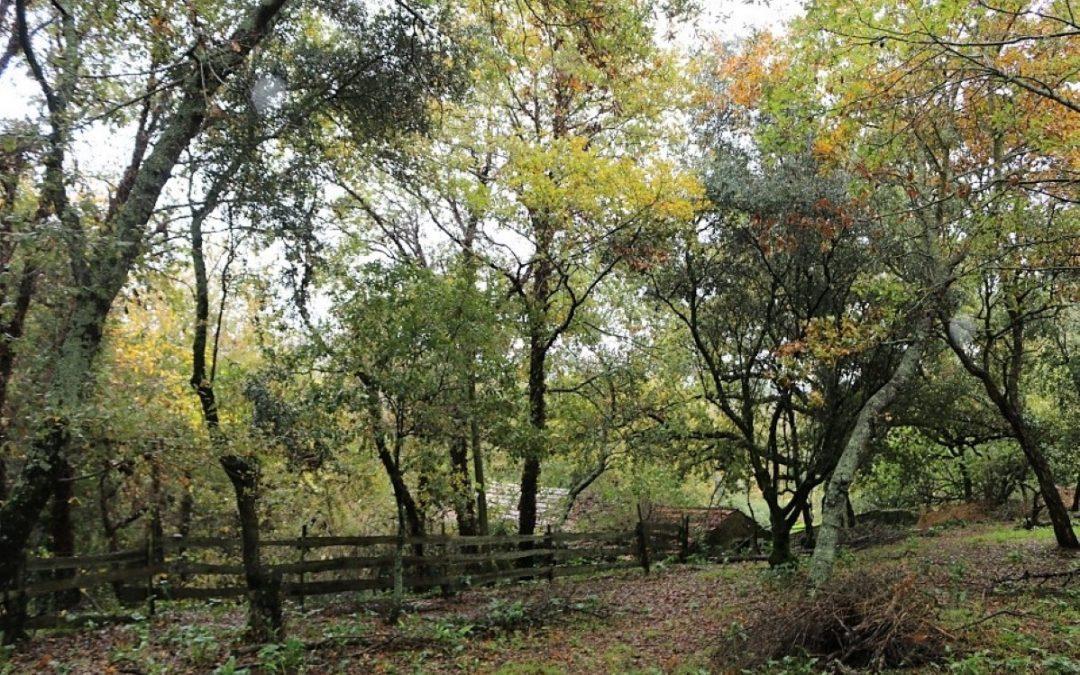 Do mato nasceu um bosque nativo