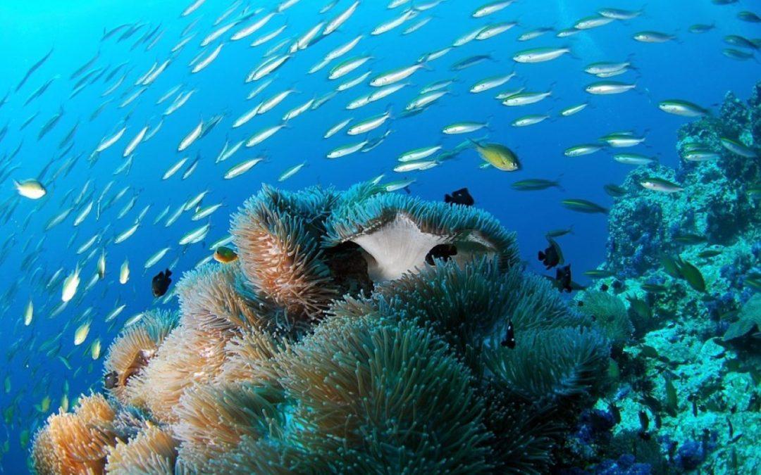 8 de Junho, Dia Mundial dos Oceanos