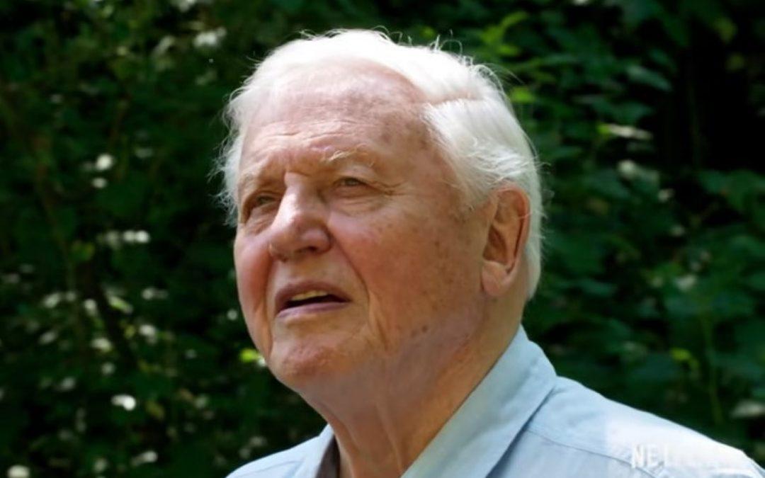 David Attenborough: Uma vida no nosso planeta