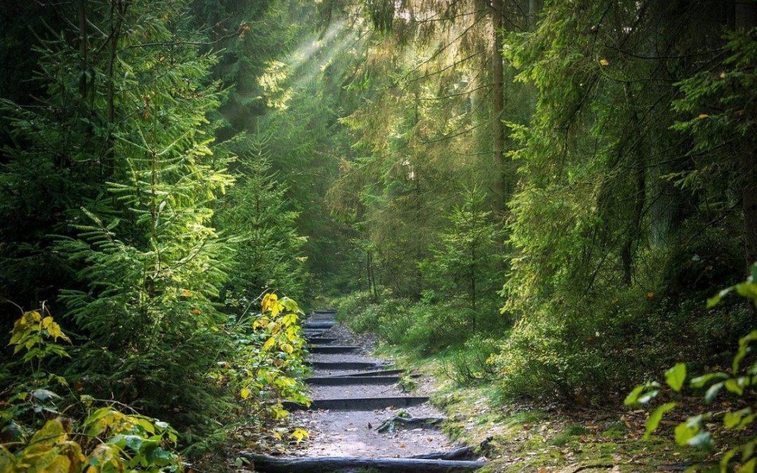 Sob a luz da Ressurreição